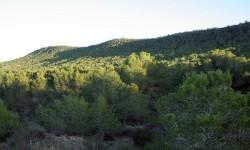 El Consell prorroga 13 días la prohibición de quemas agrícolas a menos de 500 metros de terreno forestal.