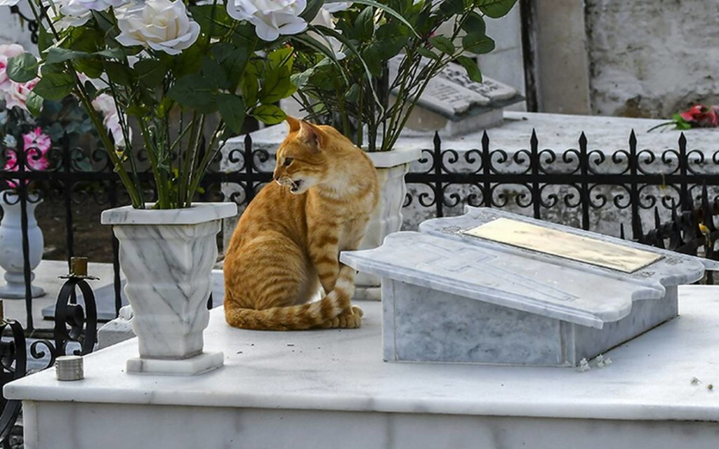 gatos-tumbas-6