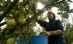 El Consell incrementa hasta 20 millones de euros la convocatoria de las ayudas a jóvenes agricultores del 2017.