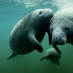 Las especies marinas en peligro de extinción