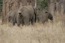 Caca-de-elefante-dildos-para-tortugas-gatos-liquidos-las-investigaciones-mas-locas-del-ano_image_380