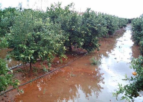 Citrus_flooding_2 (1)
