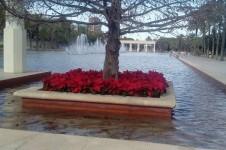 El Ayuntamiento viste de Navidad la ciudad con 6.000 flores de Pascua repartidas por los barrios y las plazas de València.