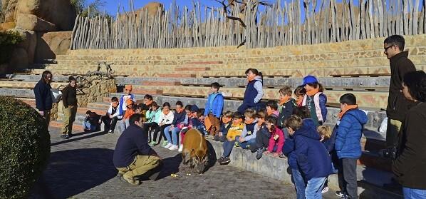 Expedición África Navidad 2017 BIOPARC Valencia - Curso expertos en potamoqueros rojos.
