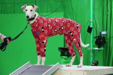 Perros-en-busca-de-hogar-se-convierten-en-modelos-de-peliculas-de-animacion_image_380