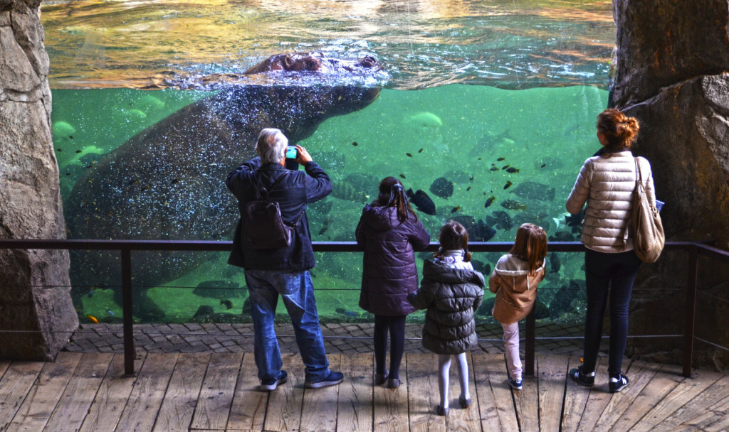 Enero 2018 - visitantes cara a cara con los hipopótamos en BIOPARC Valencia (2)
