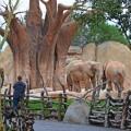 Cara a cara con los animales salvajes - elefantes - febrero 2018 BIOPARC Valencia-min