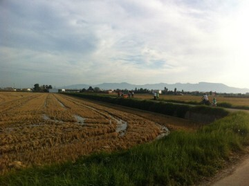 arroz arrozales (1)