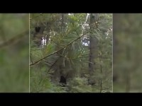 Otro encuentro con un Bigfoot