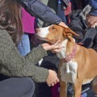 El desfile de perros abandonados AUPA/BIOPARC de esta primavera será el 13 de mayo