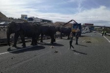 Camión de Elefantes vuelca en Albacete