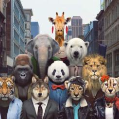 La fama de los animales más mediáticos puede llevarlos a la ruina
