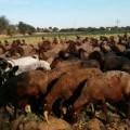0516 Conveni ramaderia