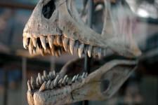 Cada-dinosaurio-carnivoro-tenia-sus-bocados-favoritos_image_380