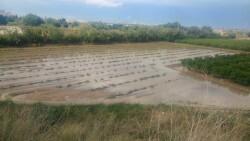 Campo de calabazas anegado hoy en Catarroja