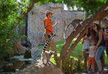 EXPERIENCIAS BIOPARC - Actividades gratuitas con tu entrada al parque - lémures en Madagascar