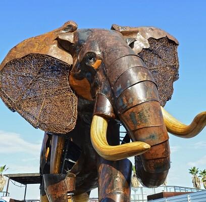 Elefante escipión. Plaza exterior BIOPARC Valencia.