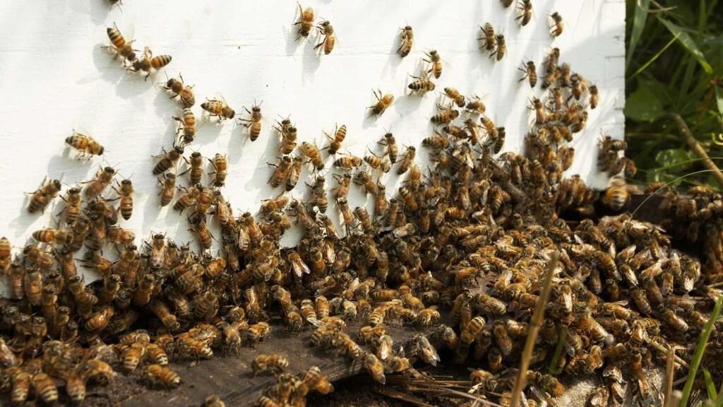 En estado crítico una pareja de octogenarios tras ser atacados por miles de abejas en Ávila
