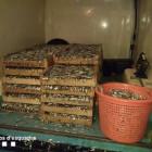 Els Mossos d'Esquadra comissen més de 600 kg de peix immadur a l'espigó de la Mar Bella