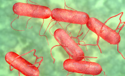 Canadian-Salmonella-Outbreak-Sends-34-To-Hospital-In-Eight-Provinces-photo(1)