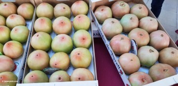 De la tierra al mercado II Semana Toma Tomate en el Mercat Colón (12)