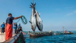 Pesca Flota Pesquera