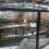 Hallan en Alicante un criadero ilegal de reptiles con serpientes y caimanes