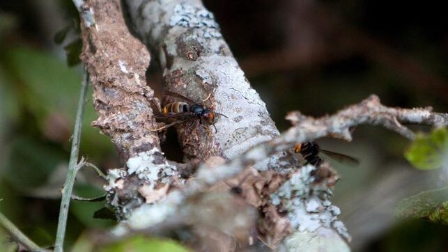 picaduras-avispas-abejas-muertes-Espana_EDIIMA20180724_0558_4