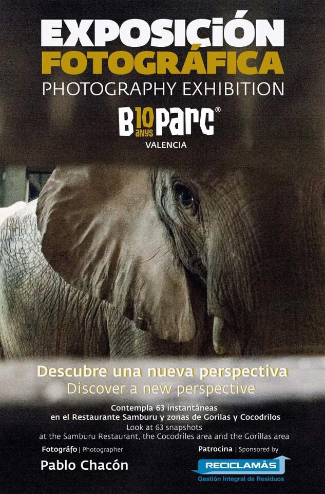 EXPOSICIÓN FOTOGRÁFICA PABLO CHACON ELEFANTE 4K