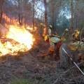 Medio Ambiente vigila el estado de humedad del monte como factor clave para la prevención de incendios