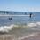 El ayuntamiento garantiza «una temporadade playas segura»