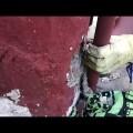 La Policía Local de Alboraya rescata un gato tras sufrir una agresión