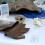 La Diputació col·labora en l'albirament de tortugues marines del programa 'Alerta Tortuga'