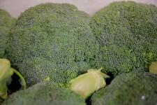 Brócoli_otoño