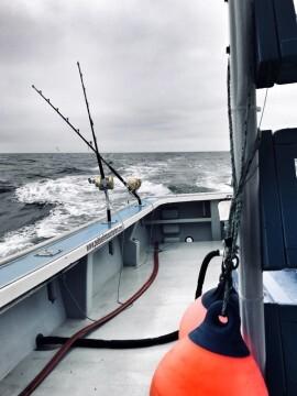 El equipo español Pescatours se prepara para la 46ª edición del Campeonato Internacional de Pesca de atún gigante (4)