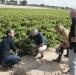 La Comunitat Valenciana es la principal productora de plantones de vid a nivel nacional