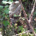 Olmos secos Clot Burriana (6)