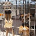 Refugio-animales-Action-Tier-1
