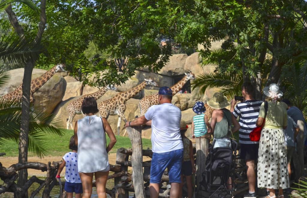 Visitantes observando a las jirafas - BIOPARC Valencia - 2018