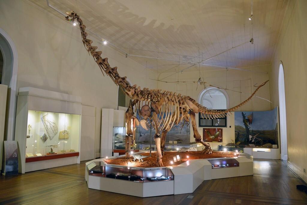 coleccion-paleontologica-museo-nacional-de-brasil_a7a99cd1_1500x1001