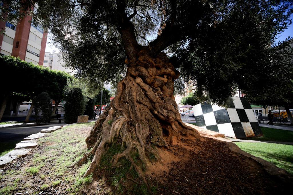 olivera (11)
