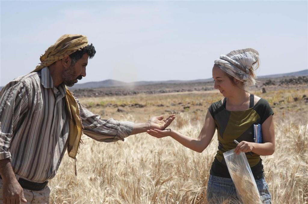El pan más antiguo del mundo, de 14.400 años de antigüedad, es anterior a la agricultura (2)