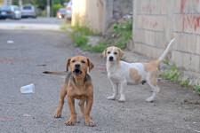 El-perro-tratado-con-insecticida-reduce-la-transmision-de-leishmaniasis-a-humanos_image_380