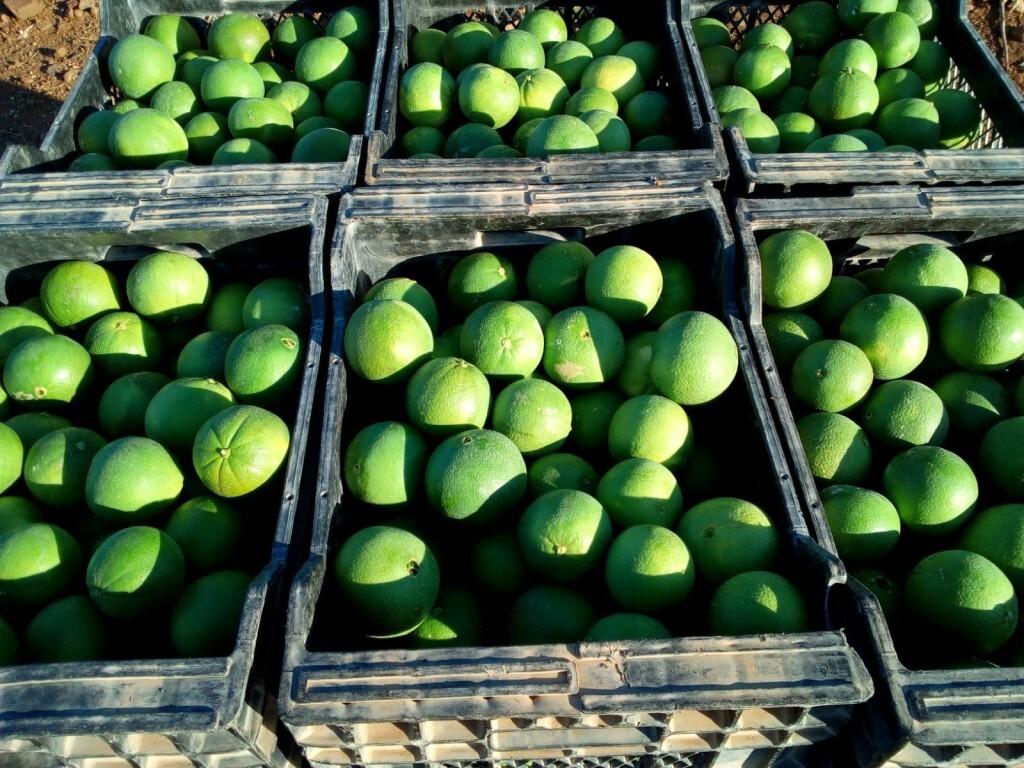 Naranjas verdes