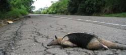 animal-atropellado-640x280-29092013