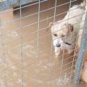 Una protectora pide ayuda para acoger a los animales tras la inundación del refugio de Benimàmet