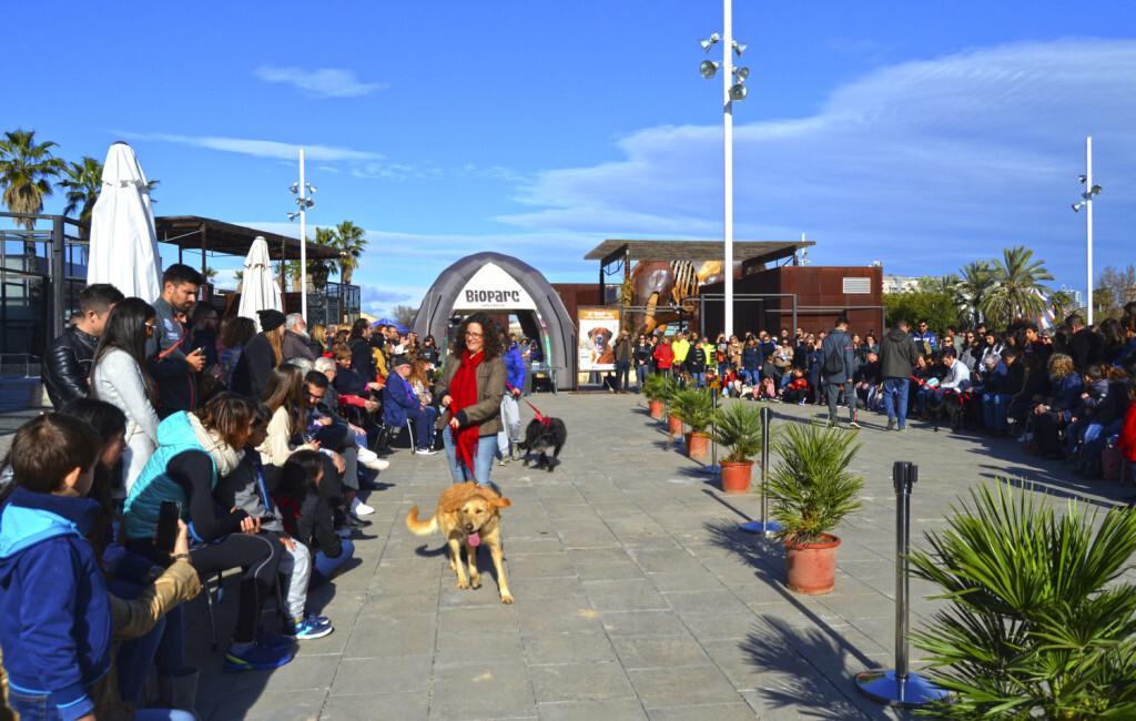 13 Desfile de perros abandonados AUPA - BIOPARC - 16 de diciembre 2018 - plaza exterior BIOPARC Valencia