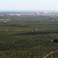 Campos_huerta_cultivos