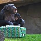 Los animales de BIOPARC Valencia celebran la Navidad