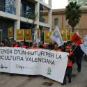 2.000 citricultores se manifiestan a las puertas de la Conselleria de Agricultura para exigir soluciones a la crisis que arruina al sector